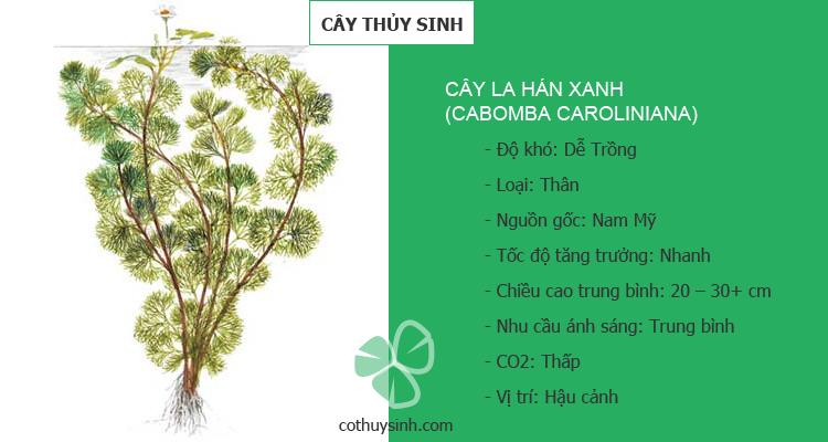 cay-la-han-xanh-featured