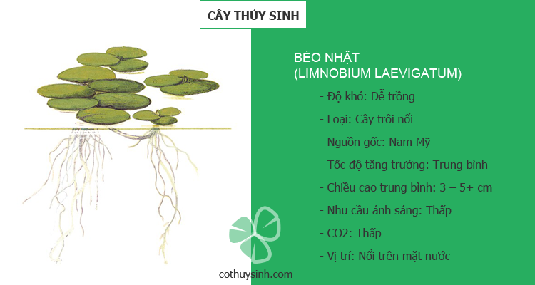 beo-nhat-featured