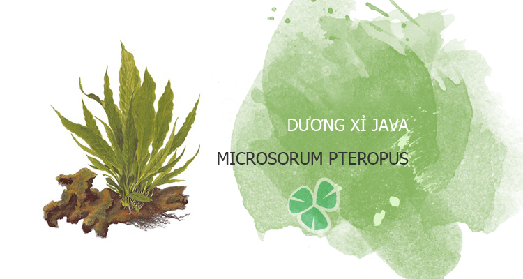 duong-xi-java-featured